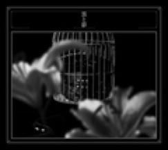 黒夢 「黒と影」
