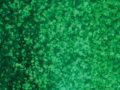 Green Spkl